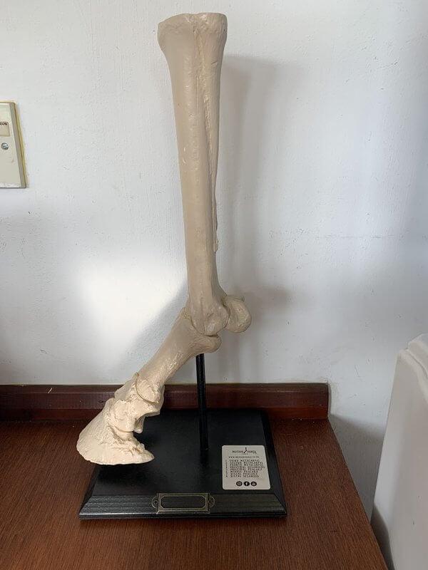 Caballo de movimiento: extremidad distal en soporte