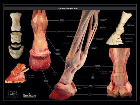 Paige Poss Anatomy posters
