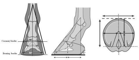 Az ideális lábmérleg modell sematikus ábrája