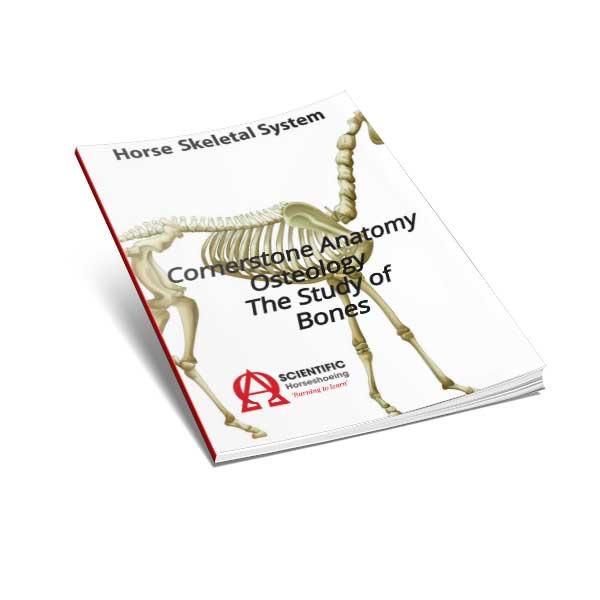 Osteologie-Studie-der-Knochen-E-Book