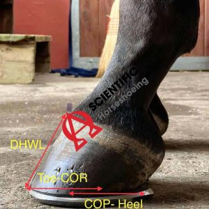 Hoof Proportional Values Lat 2