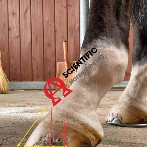 Hoof Proportional Values Lat