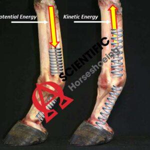 Energía cinética de la extremidad inferior