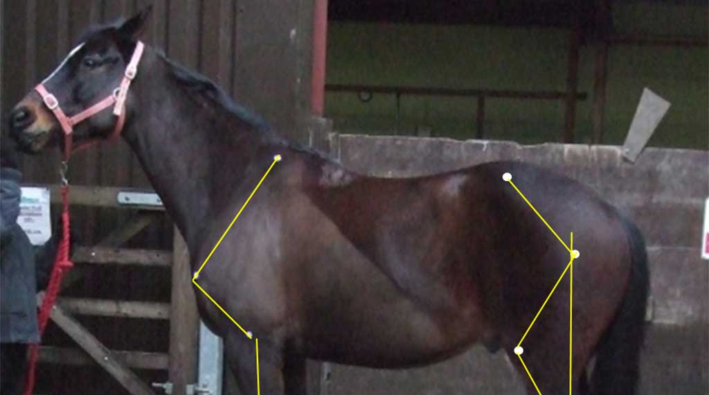 Conformation and Movement for Farriery Students and Hoof Care Professionals