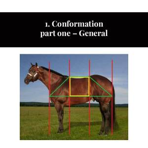 1. Conformation part one - General