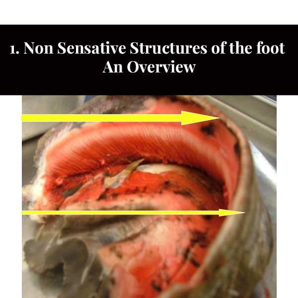 1. Estruturas não sensíveis do pé - Uma Visão Geral