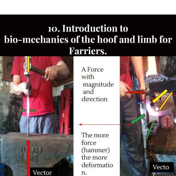 10. Introduction à la biomécanique du sabot et du membre pour les maréchaux-ferrants