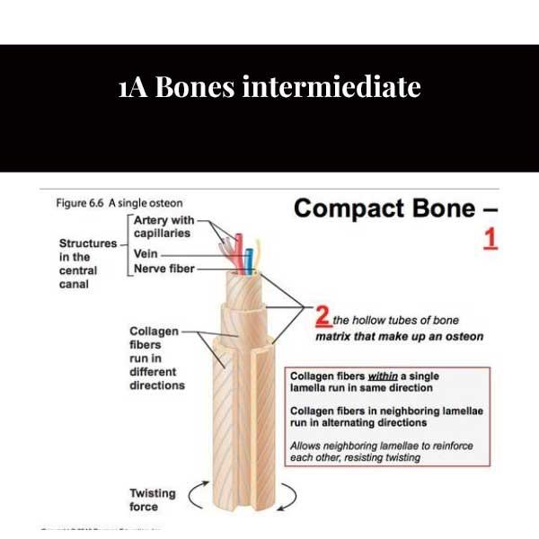 1A Csontok közbenjárnak