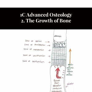 1C Advanced Osteology 2. La crescita dell'osso
