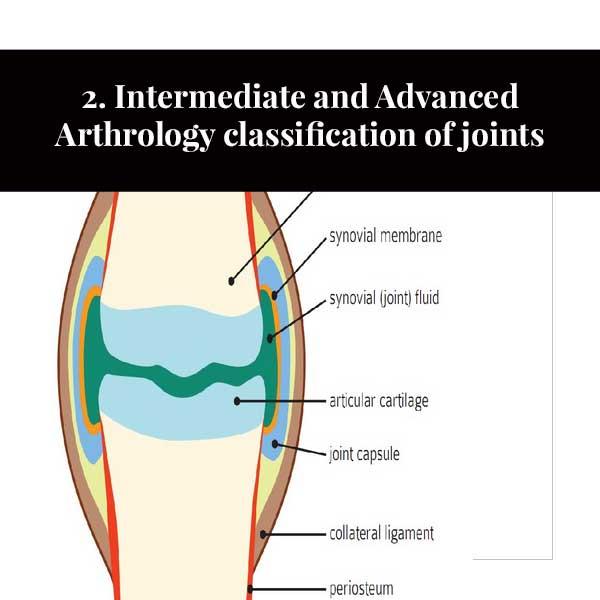 2. Classificação intermediária e avançada da artrologia da articulação
