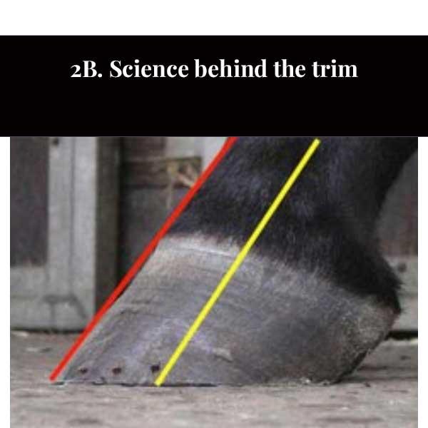 2C. El pie equino y el recorte fisiológico