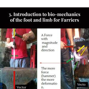 3. Introduction to bio-mechanics of the foot and limb for Farriers