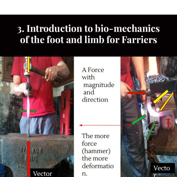 3. Introduzione alla biomeccanica del piede e dell'arto per Maniscalchi