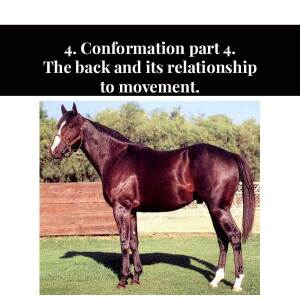 4. Conformation part 4. The back and its relationship to movement.