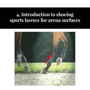 4. Introduction to shoeing sports horses for arena surfaces