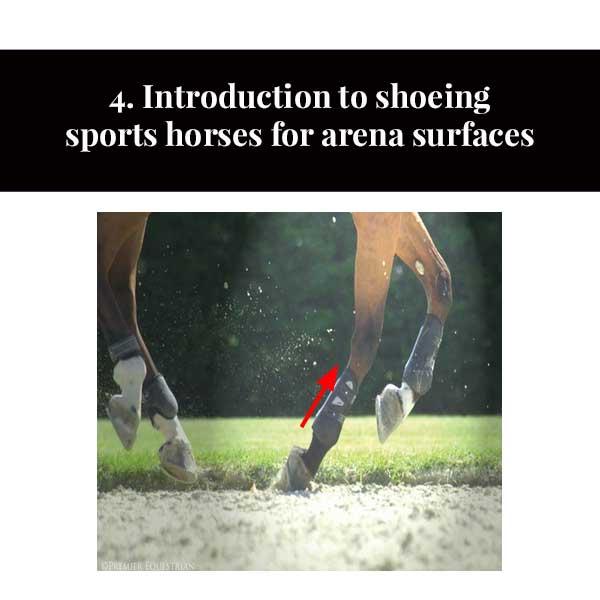 4. Introduction au ferrage des chevaux de sport pour les surfaces d'arène
