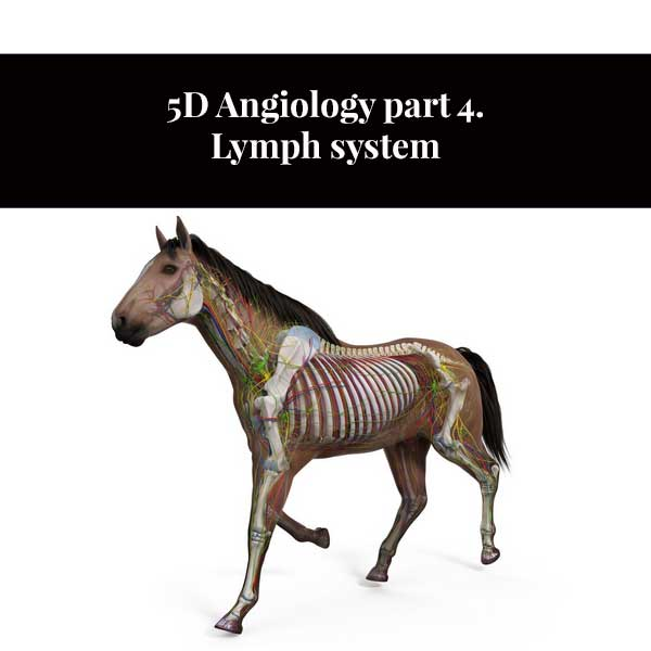 5D Angiology part 4. Lymph system