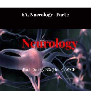6A. Nuerologie - Partie 2