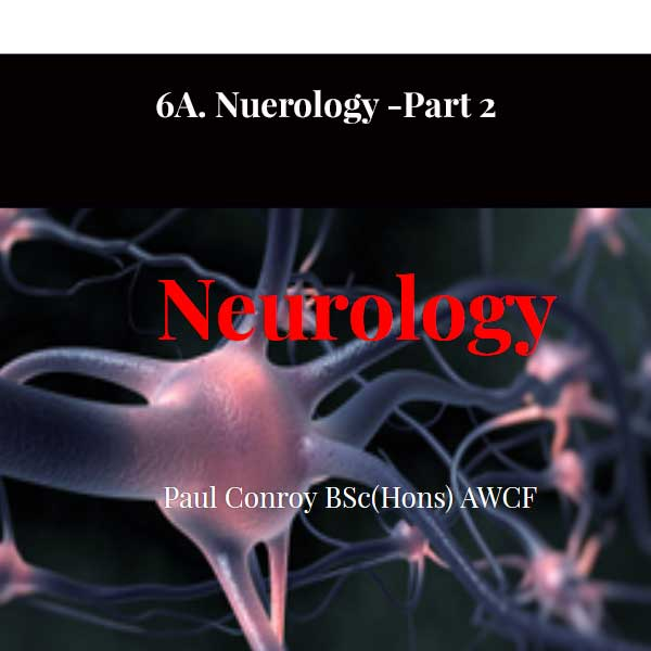 6A. Nuerology -Part 2