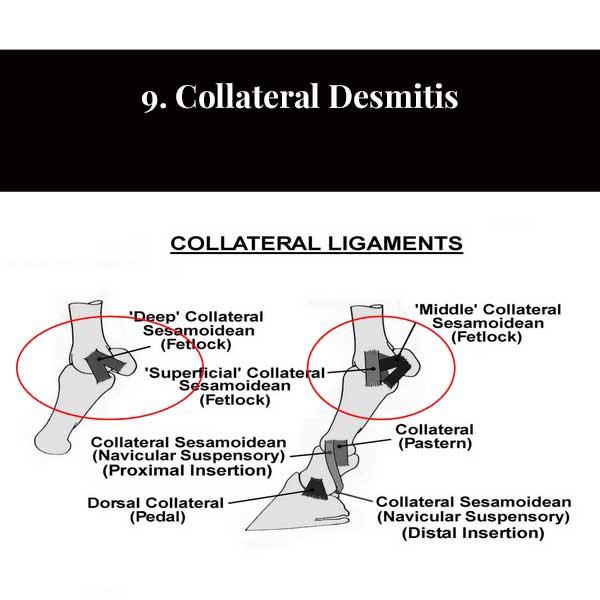 9. Collateral Desmitis