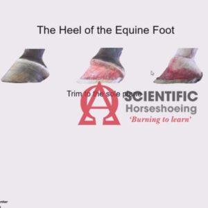 Tutorial de anatomia do pé equino (área do calcanhar)