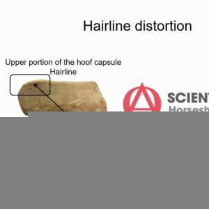 Distorsion dans le didacticiel Hairline