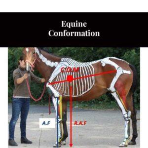 Conformation équine