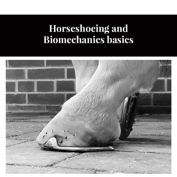 Horseshoeing and Biomechanics basics