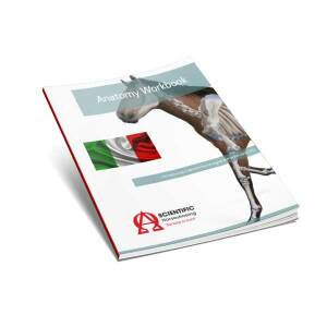 Anatomy Workbook - Italian