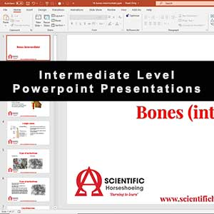 Intermediate Level Presentation
