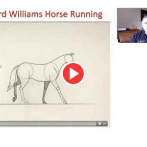 Animated Equine Movement Video