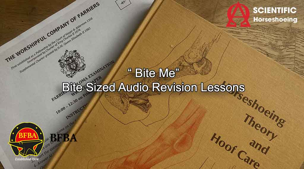 Curso de revisão Bite Sized AUDIO