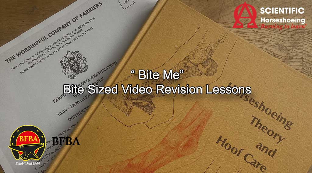 Bite Sized Revision Course