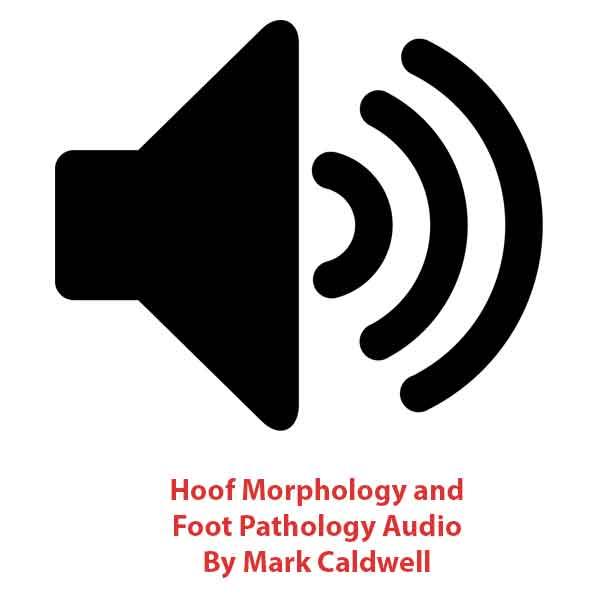 Hufmorphologie und Fußpathologie Audiodatei