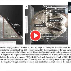 Hoof-Morphology-And-Foot-Pathology-Video