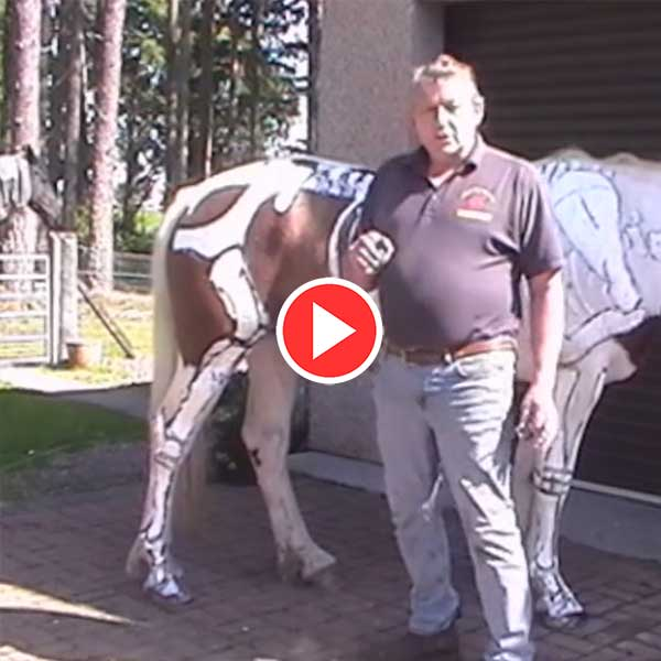 The-Basic-Skeletal-Structure-Of-The-Horse-Video