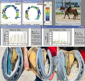The use of 'Inshoe Prosthetic Inserts' in Farriery Treatment Plans